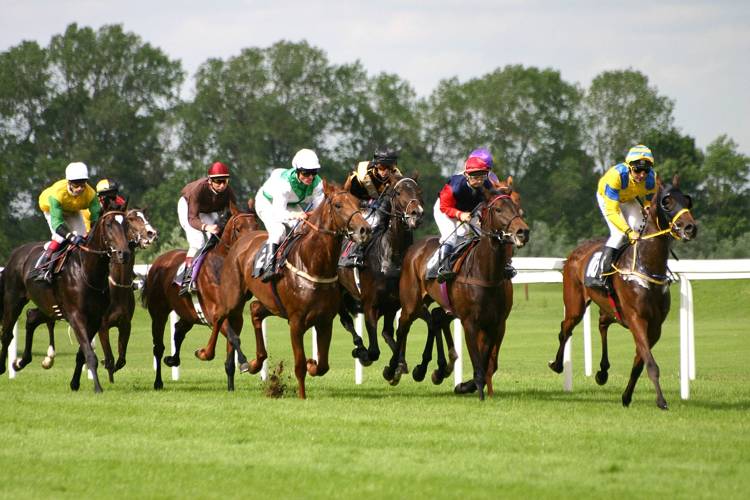 Courses de chevaux et sport hippique